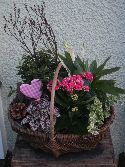 Sussex Planted Basket