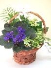 Mixed planted basket.